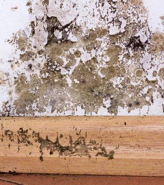 Plísně vkoupelnách souvisí svelkým množstvím vodních par. Odstraňování plísní vPardubicích.